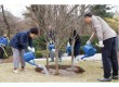 박근혜 대통령 식목일 기념식수1.jpg