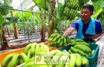 코로나 19로 인해 구인난에 허덕이는 농가들을 위해 양남농협에서는 농촌인력중개센터(영농작업…